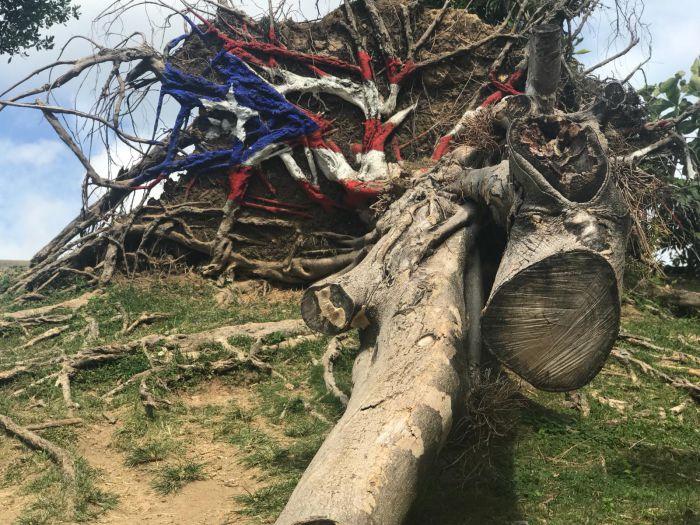 Un árbol caído del huracán, pintado con la bandera puertorriqueña
