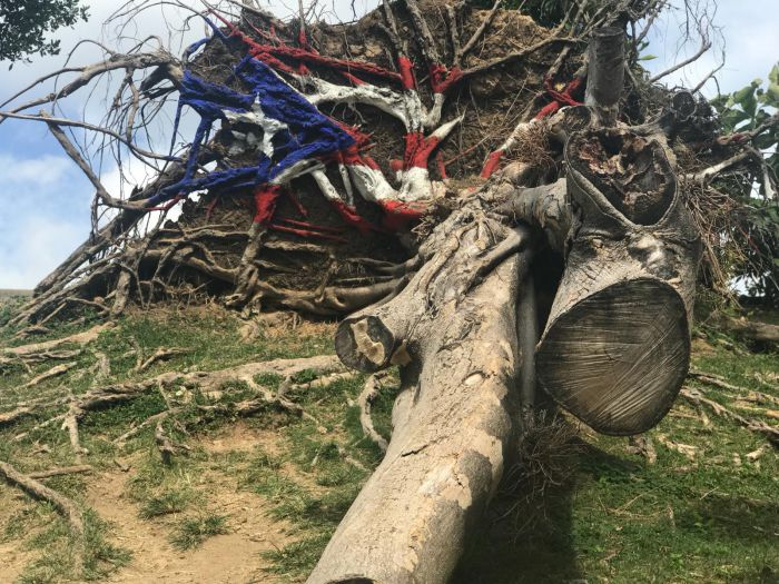 A fallen tree from the hurricane, painted with the Puerto Rican flag